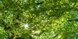 Через Солнце после зеленых листьев Стоковое Изображение RF