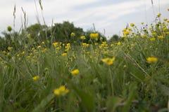 Через траву Стоковые Изображения