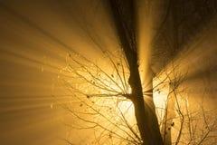 Через туман Стоковое фото RF