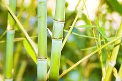 черенок графика конструкции предпосылки bamboo Стоковые Изображения RF