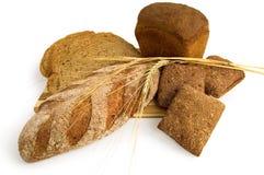 черенок рожи хлеба Стоковые Изображения