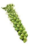 черенок ростков brussels Стоковые Фото