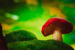 Черенок свежей сыроежки гриба белое растет на мхе Стоковая Фотография
