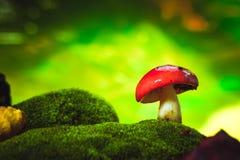Черенок свежей сыроежки гриба белое растет на мхе Стоковая Фотография RF
