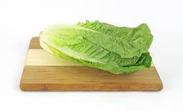 черенок romaine салата одиночное Стоковая Фотография RF