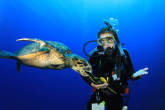 черепаха водолаза стоковая фотография rf