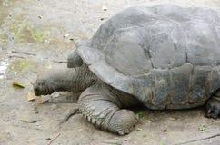 Черепаха в зоопарке Стоковые Изображения RF