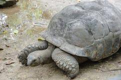 Черепаха в зоопарке Стоковые Изображения