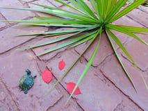 Черепаха в красном цвете Стоковое Изображение