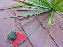Черепаха в красном цвете Стоковая Фотография RF