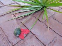 Черепаха в красном цвете Стоковые Изображения
