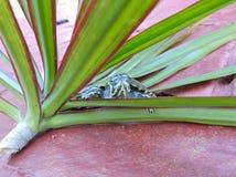 Черепаха в красном цвете Стоковое Изображение RF