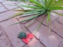 Черепаха в красном цвете Стоковые Изображения RF