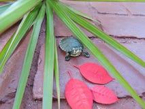 Черепаха в красном цвете стоковое фото