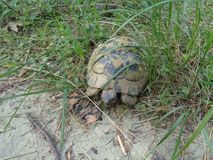 Черепаха в лесе стоковая фотография