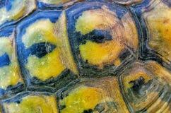 Черепаха в Менорке Стоковые Фото