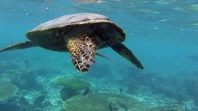 Черепаха в море видеоматериал