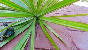 Черепаха в растительности Стоковые Фотографии RF