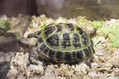 Черепаха в terrarium стоковая фотография rf