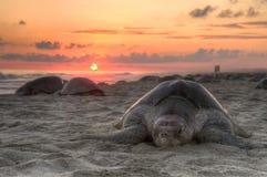 черепаха захода солнца океана Стоковое фото RF