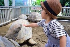 Черепаха и японский мальчик Стоковое Изображение RF