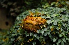 Черепаха камнем Стоковая Фотография RF