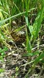 Черепаха коробки богато украшенная Стоковое Изображение RF