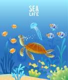 Черепаха мира моря стоковое фото rf