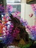 Черепаха младенца Грифовая стоковая фотография rf