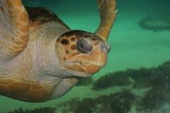 черепаха морской черепахи стоковые изображения