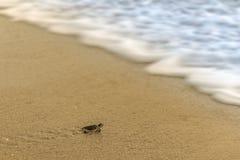 Черепаха моря на пляже Стоковая Фотография