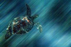 черепаха моря Стоковое фото RF