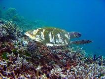 черепаха моря 3 подводная стоковая фотография