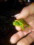 Черепаха младенца Стоковые Фото