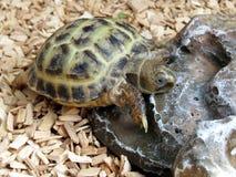 Черепаха младенца стоковое фото rf
