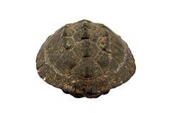 Черепаха на белой предпосылке Стоковые Изображения