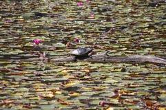 Черепаха на журнале Стоковое фото RF