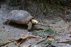 Черепаха на зоопарке в Таиланде, Азии Стоковое фото RF