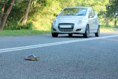 Черепаха на дороге Стоковые Изображения
