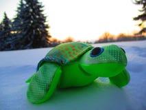 Черепаха на снеге Стоковое Изображение RF