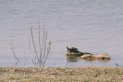 Черепаха на утесах Стоковое фото RF
