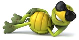 черепаха потехи Стоковая Фотография RF
