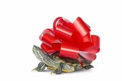 Черепаха - подарок Стоковая Фотография