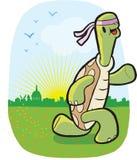 черепаха пригодности Стоковое Изображение RF