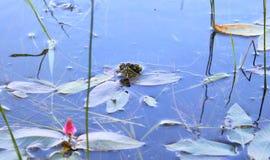 Черепаха пруда стоковое фото