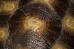 черепаха раковины предпосылки Стоковая Фотография RF