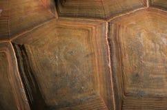 черепаха раковины Стоковая Фотография RF