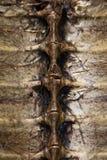 черепаха раковины Стоковая Фотография