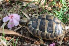 Черепаха среди травы и листвы стоковое изображение rf