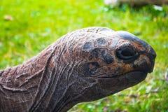 черепаха травы зеленая стоковое изображение